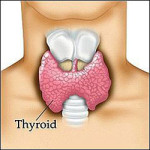 Carb Back-Loading and Thyroid Hormone
